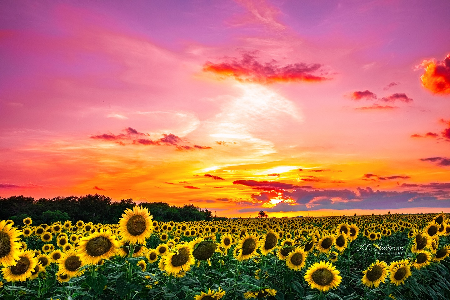 Sunset over a Sunflower field