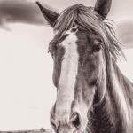"""Hay!"" photograph by KC Hulsman"
