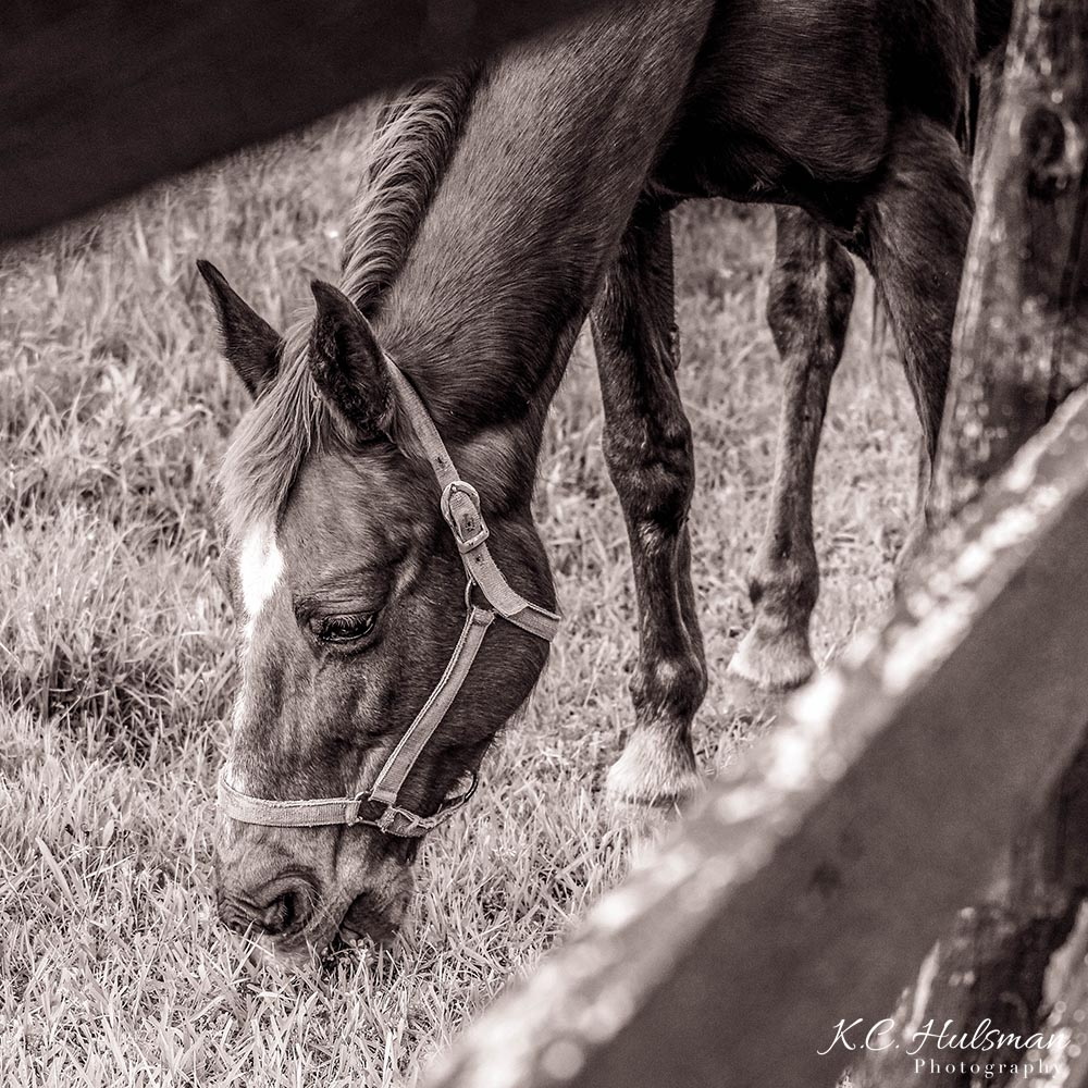"""Horse d'oeuvre"" photograph by KC Hulsman"