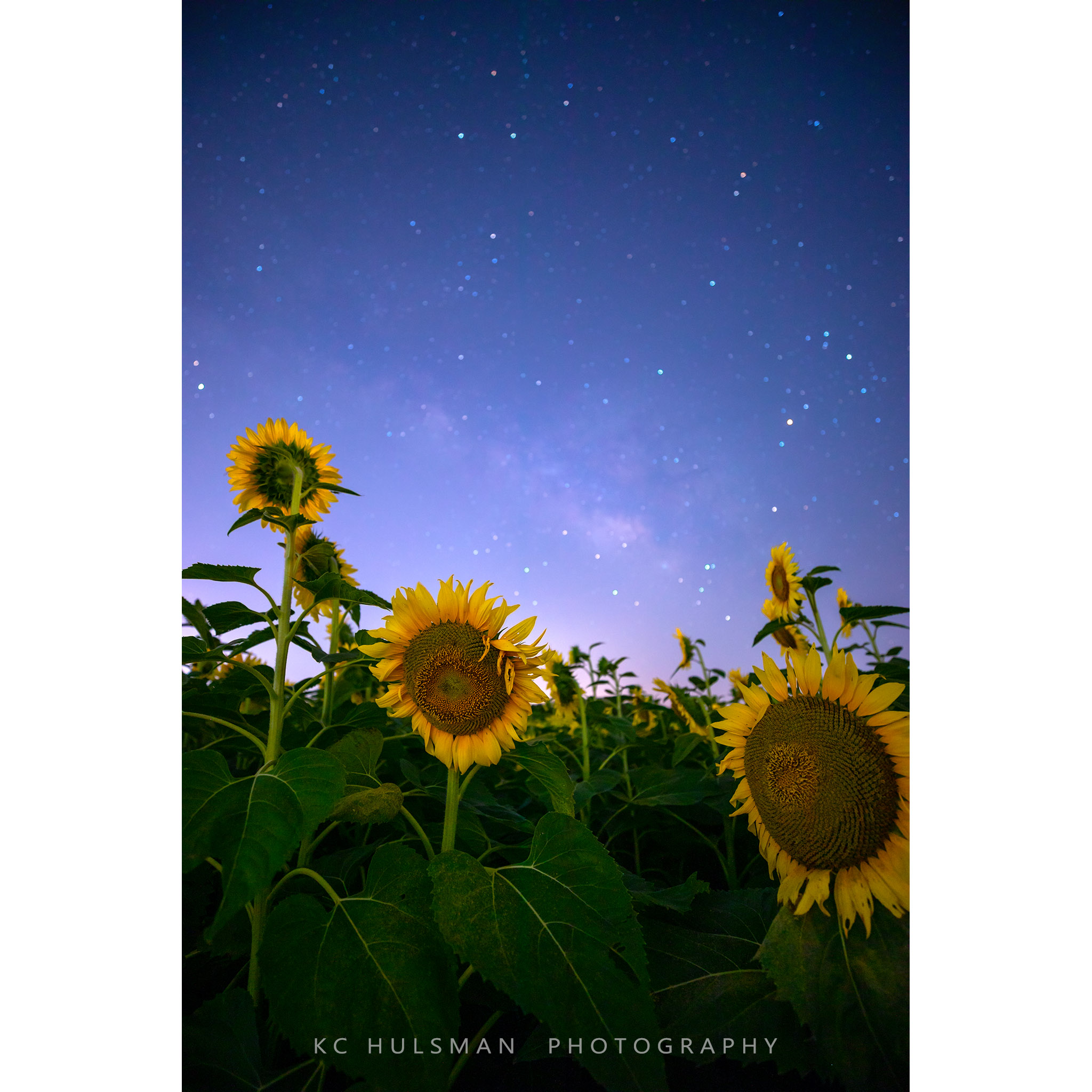Photo of Starry Skies Over a Field of Sunflowers